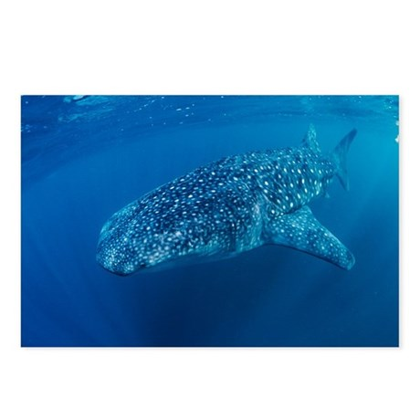 Whale shark - Postcards
