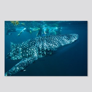 Whale shark - Postcards