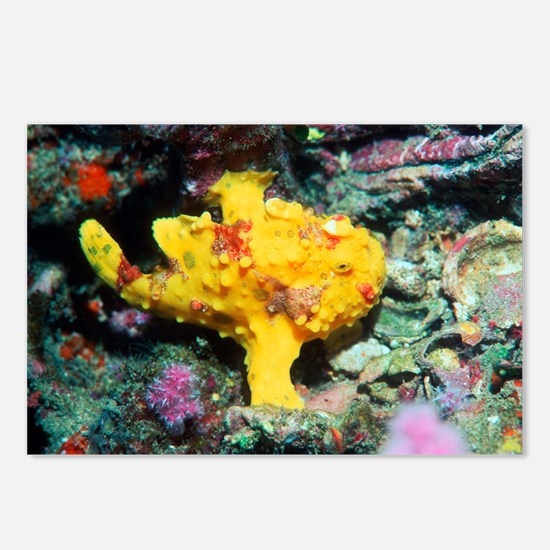 Warty frogfish - Postcards
