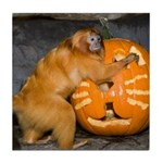 Tamarin With Pumpkin Tile Coaster