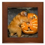 Tamarin With Pumpkin Framed Tile
