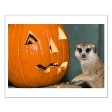 Meerkat Next to Pumpkin Small Poster