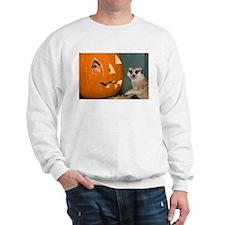 Meerkat Next to Pumpkin Sweatshirt