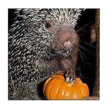 Porcupine Holding Mini Pumpkin Tile Coaster