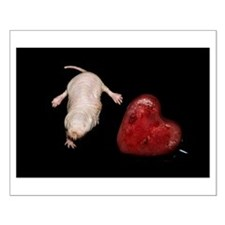Naked Mole Rat With Heart Small Poster