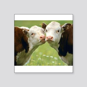 "Kissing Cows Square Sticker 3"" x 3"""