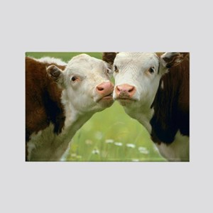 Kissing Cows Rectangle Magnet
