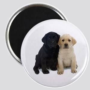 Black and White Labrador Puppies. Magnet