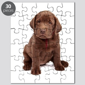 Chocolate Labrador Puppy. Puzzle