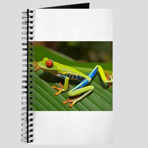 Red Eyed Tree Frog Journal