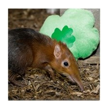 Elephant Shrew with Shamrock Tile Coaster