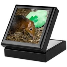 Elephant Shrew with Shamrock Keepsake Box