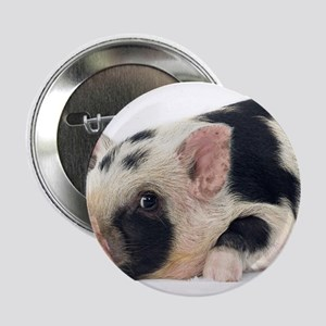 "Micro pig chilling out 2.25"" Button"
