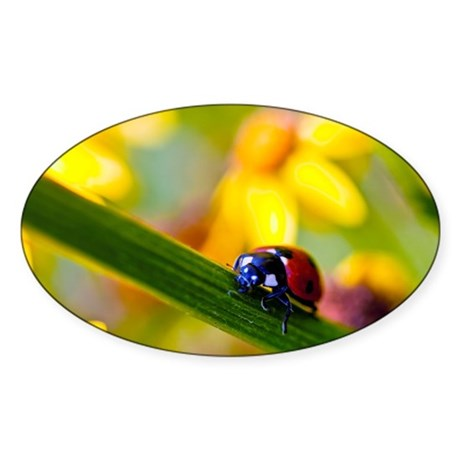 Ladybird on Ragwort flowers Sticker (Oval 50 pk)
