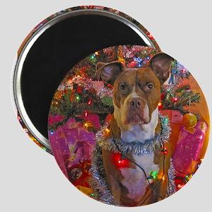 pitbull christmas card Magnet