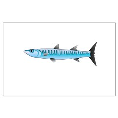 Pacific Barracuda fish Posters