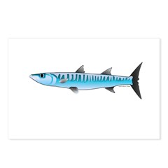 Pacific Barracuda fish Postcards (Package of 8)