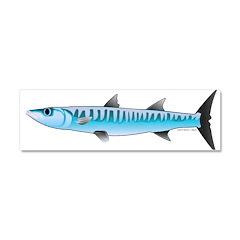 Pacific Barracuda fish Car Magnet 10 x 3