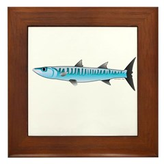 Pacific Barracuda fish Framed Tile