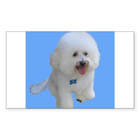Beau the Bichon Frise Dog on Sky Blue Sticker (Rec