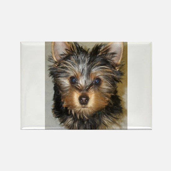 I Luv Yorkies Rectangle Magnet