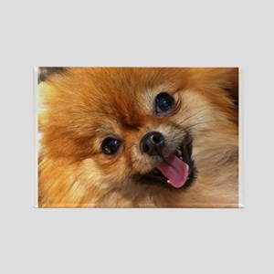 Happy Pomeranian Rectangle Magnet