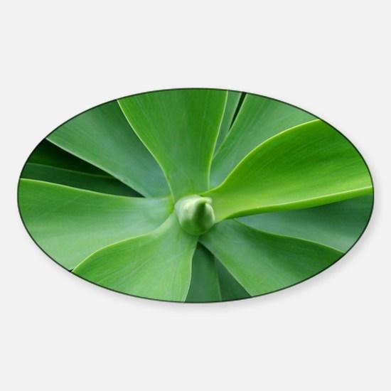 Receding Leaves Sticker (Oval)