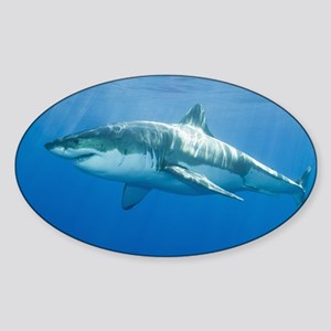 Great White Shark Sticker (Oval)