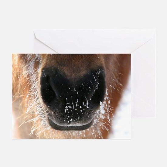 Icelandic Horse Greeting Cards (Pk of 10)