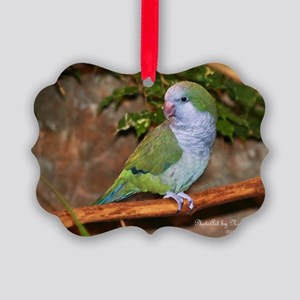 Quaker Parrot Picture Ornament