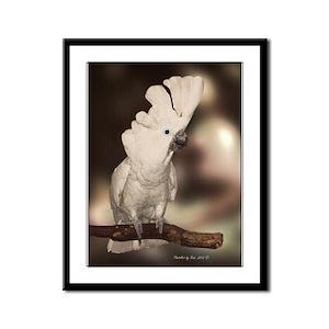 Umbrella Cockatoo Framed Panel Print
