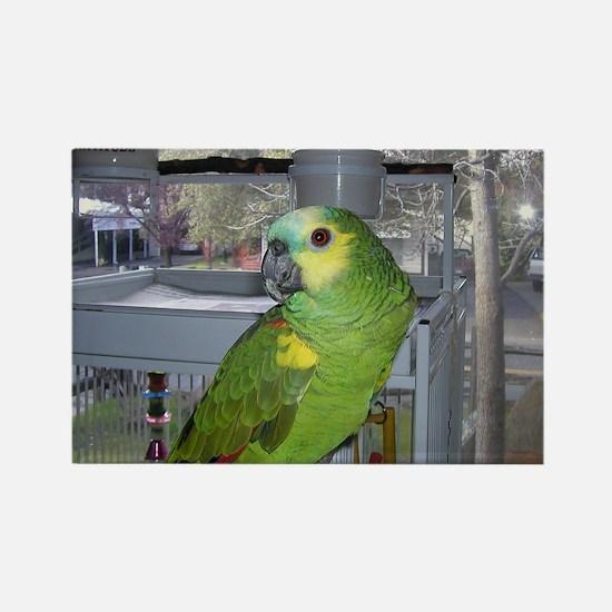 Parrot Design Rectangle Magnet