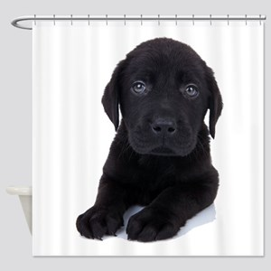 Curious Black Labrador Shower Curtain