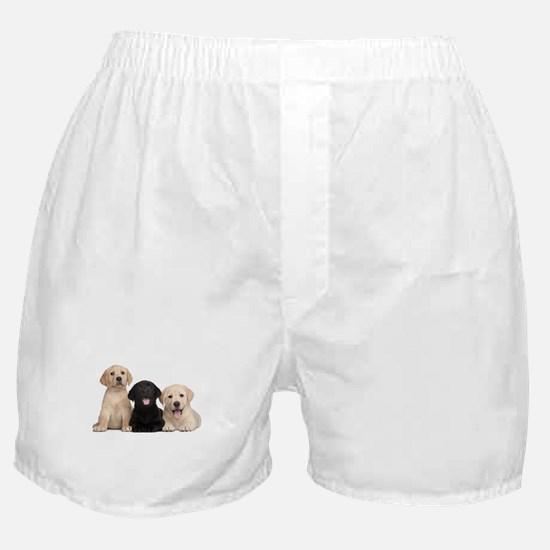 Labrador puppies Boxer Shorts