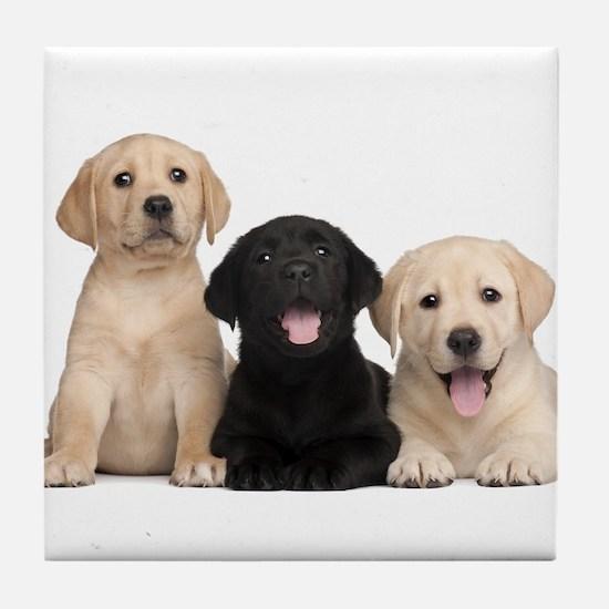 Labrador puppies Tile Coaster