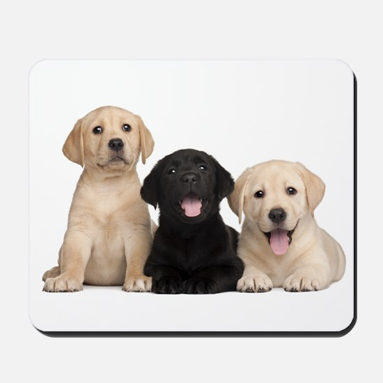 Labrador puppies Mousepad