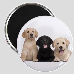 Labrador puppies Magnet