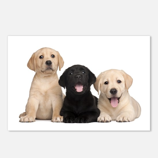 Labrador puppies Postcards (Package of 8)