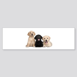 Labrador puppies Sticker (Bumper)