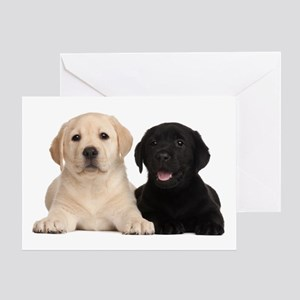 Labrador puppies Greeting Card