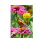 Variegated Fritillary Rectangle Magnet