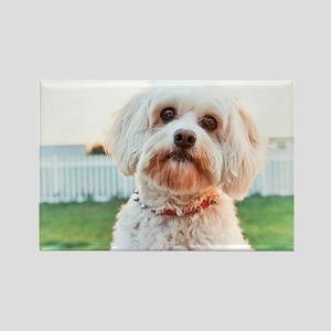 Dog Dayz Lily Rectangle Magnet