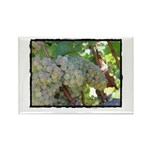 Napa Grapes as Art Rectangle Magnet (100 pack)