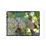 Napa Grapes as Art Postcards (Package of 8)