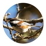 Chickadee in Tree Round Car Magnet