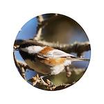 Chickadee in Tree 3.5