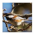 Chickadee in Tree Tile Coaster