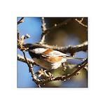 Chickadee in Tree Square Sticker 3