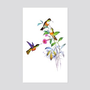 Hummingbirds Sticker (Rectangle)