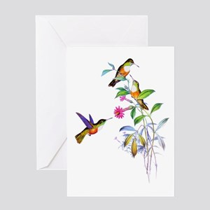 Hummingbird greeting cards cafepress hummingbirds greeting card m4hsunfo